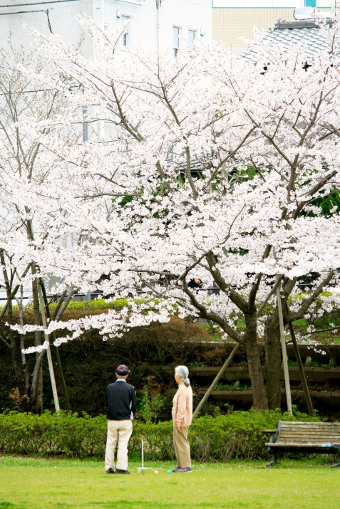 A couple playing crochet and admiring the Cherry Blossoms