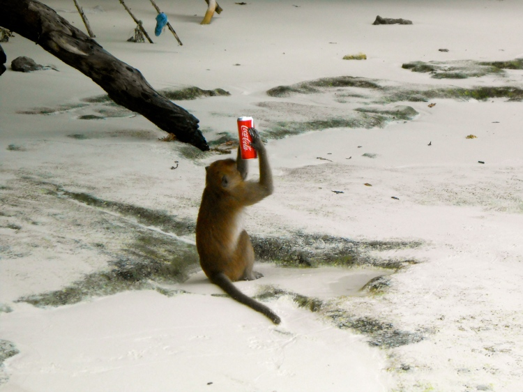 Monkey Beach...a monkey drinking a soda