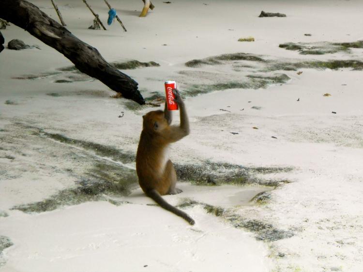 Monkey Beach...a monkey drinking a soda