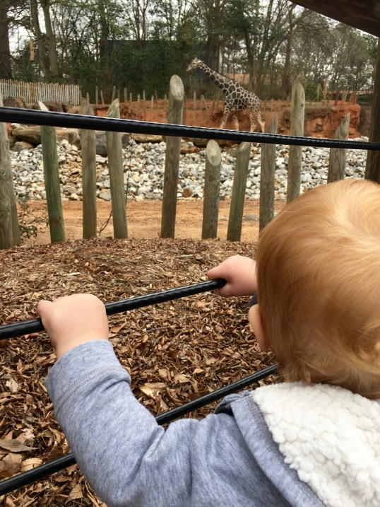 Jackson at the zoo